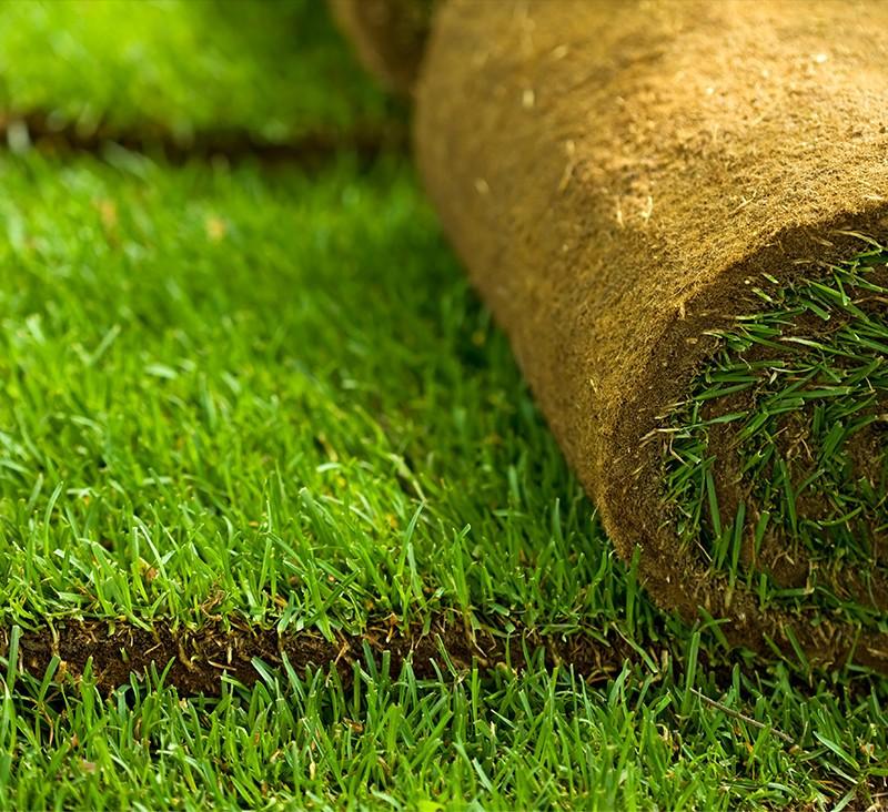 Trawniki rolowane